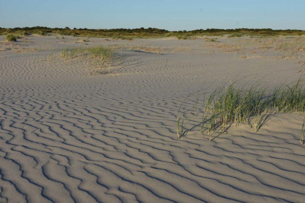 Windverwehungen im Sand