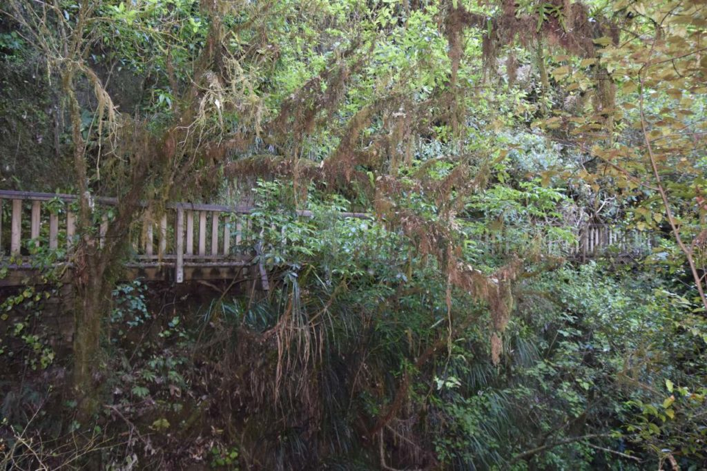 Wandern bei den Waitomo Caves