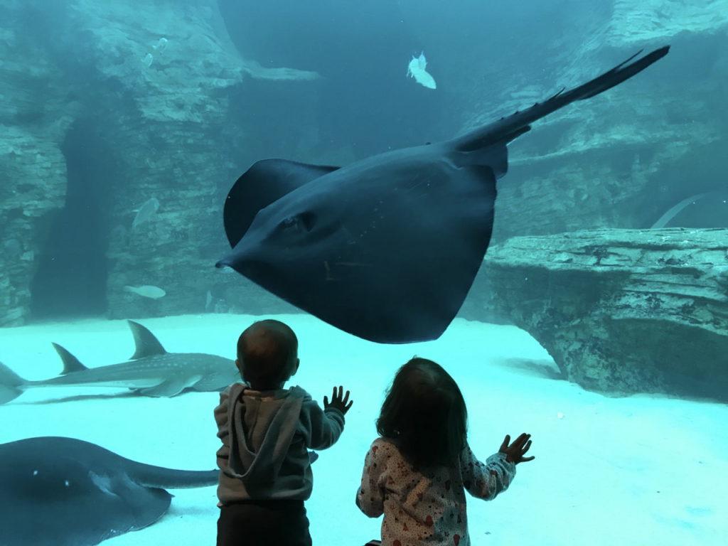 Rochen im Two Oceans Aquarium