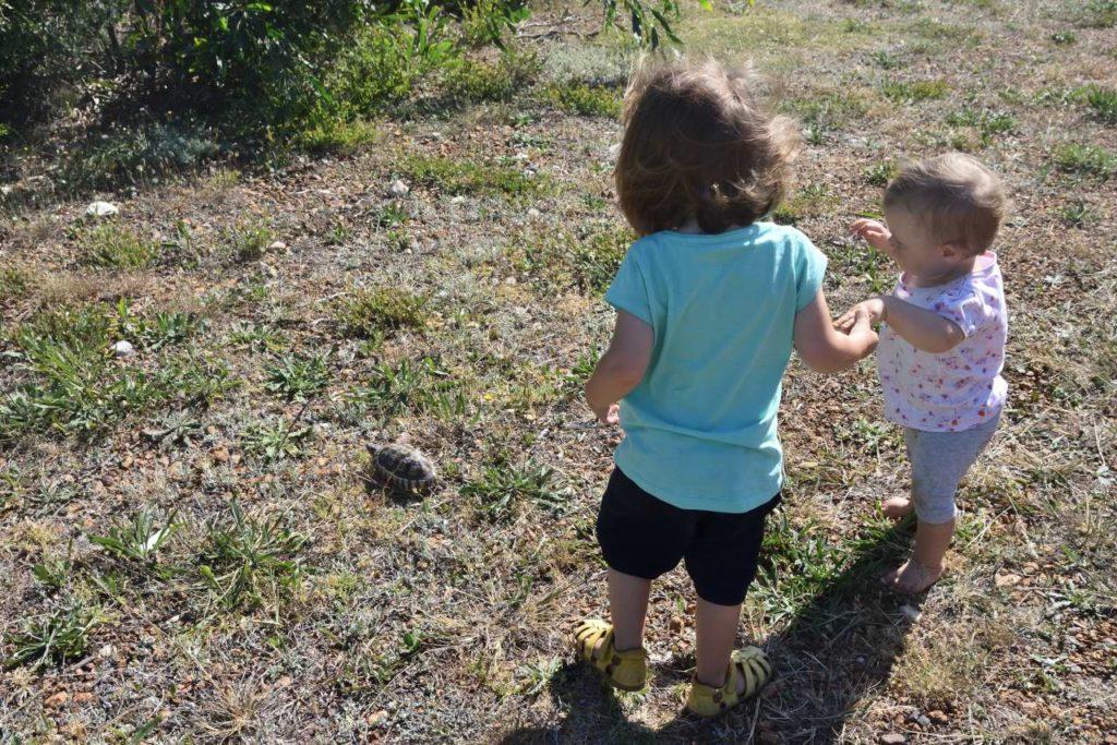 Schildkröte beobachten