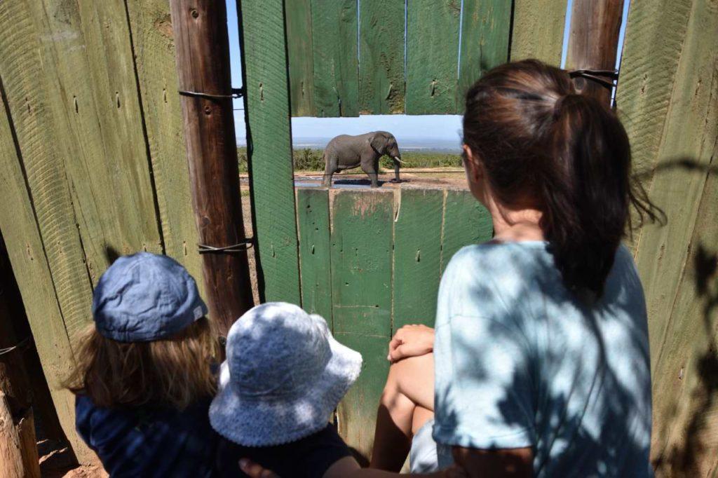 Hide im Addo Elephant Park