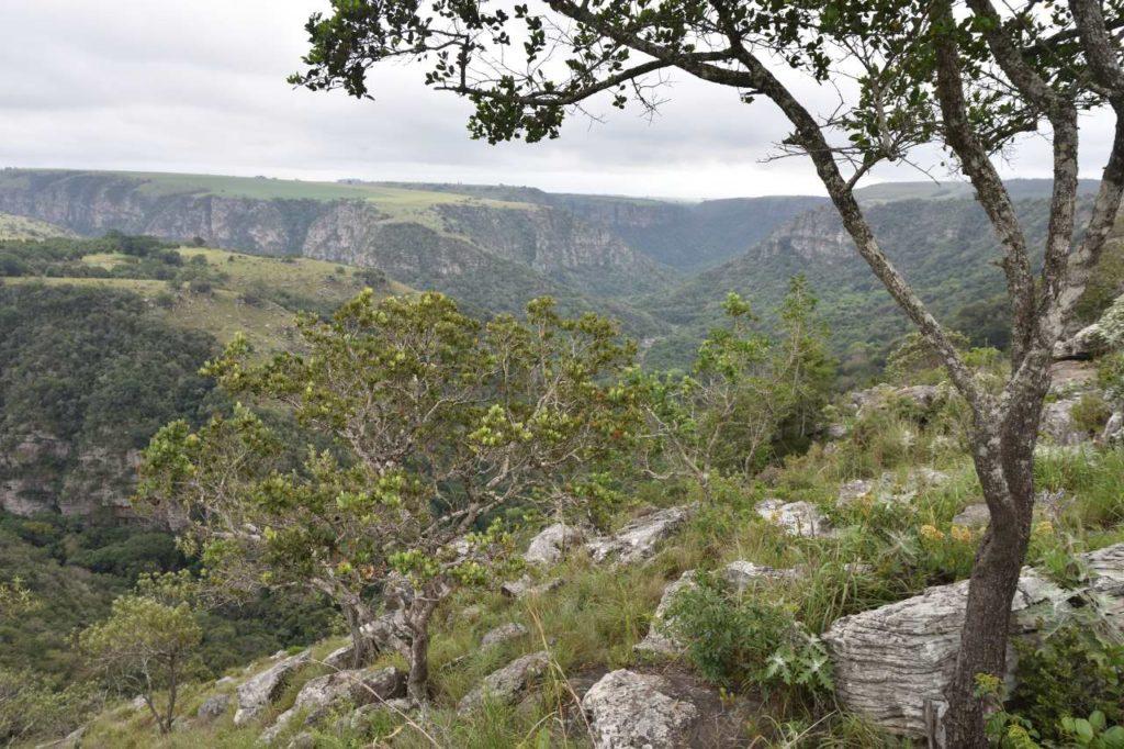 Ausblick vom Baboon View