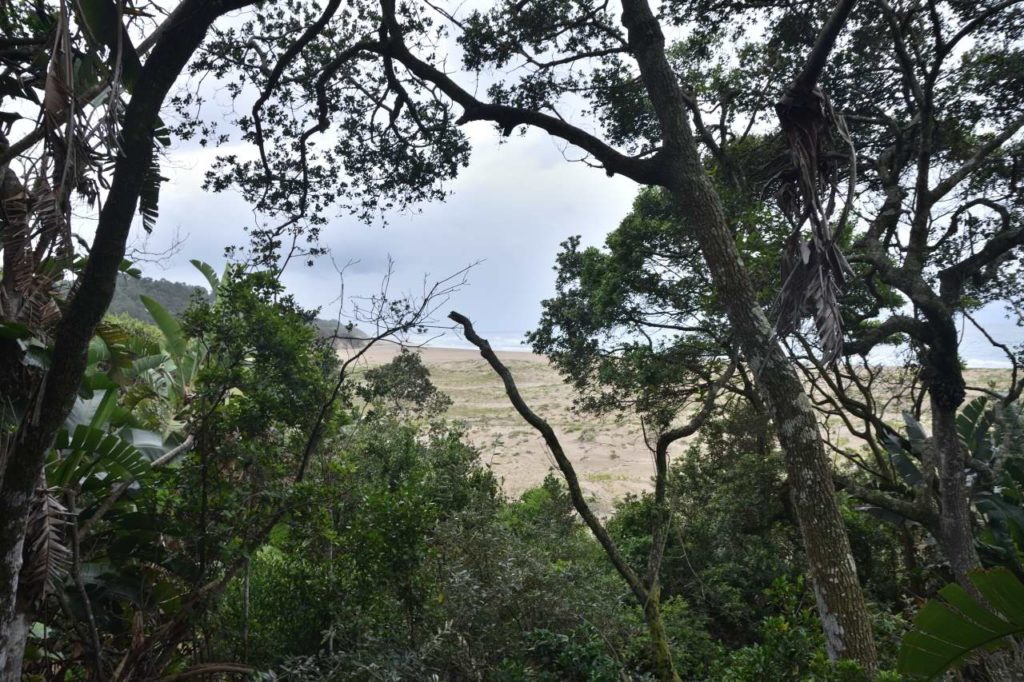 Ausblick aus dem Küstenregenwald auf den Strand